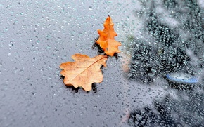 Picture WATER, DROPS, GLASS, LEAVES, RAIN, AUTUMN