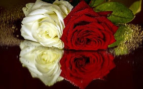 Picture drops, roses, different