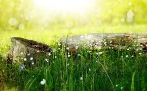 Picture summer, grass, light, flowers, nature, stump, log, bokeh, Larisa Koshkina