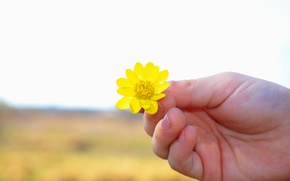 Picture field, flower, hand