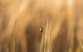 Wallpaper grass, ladybug, crawling
