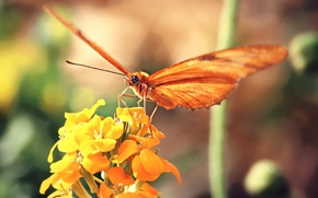 Picture flower, yellow, background, butterfly, orange