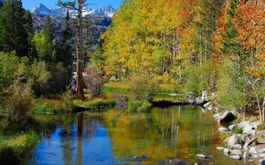 Picture autumn, forest, the sky, trees, mountains, river, stones