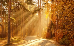 Picture autumn, forest, the sun, rays, trees