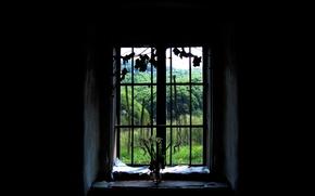 Wallpaper window, black background, forest
