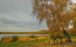 Picture autumn, grass, leaves, river, shore, birch, table, benches