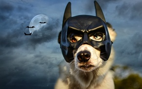 Picture the sky, night, clouds, the moon, dog, mask, Batman, bats, Wallpaper from lolita777