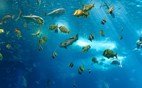 Picture sea, the ocean, fish, under water, underwater, sea, ocean, fish