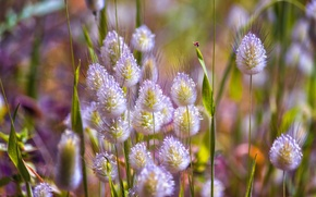 Picture macro, nature, meadow, grass
