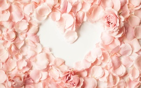 Picture heart, petals, pink