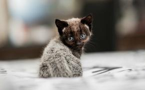 Wallpaper blur, sitting, Kitty