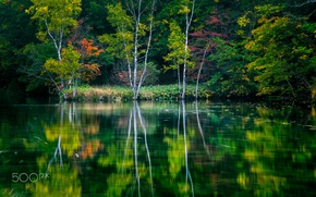 Picture water, trees, nature, lake, river