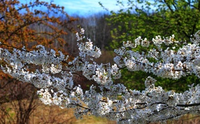 Picture nature, Spring, flowering, nature, spring, flowering