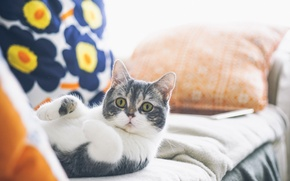 Picture cat, cat, mustache, legs, wool, looks
