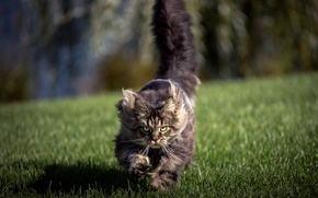 Picture field, cat, background