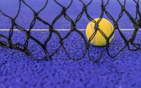 Picture mesh, sport, the ball