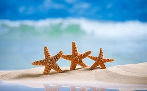 Picture sand, sea, beach, starfish, summer, beach, sea, sand, vacation, starfishes
