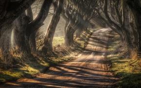 Picture autumn, trees, Northern Ireland, Antrim County, the road Bregagh Road, Ballymoney, Dark alley