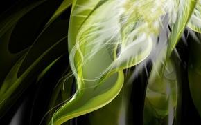 Wallpaper green, plant
