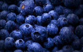Picture berries, blueberries, bilberries