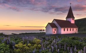 Picture the sky, clouds, sunset, flowers, the ocean, coast, the evening, Iceland, Church, lupins