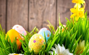 Wallpaper flowers, holiday, wall, Easter, eggs, Easter, Board, daffodils, chamomile, grass