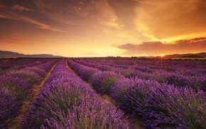 Picture field, sunset, the rays of the sun, lavender