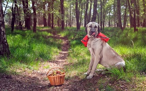 Picture forest, dog, basket, path