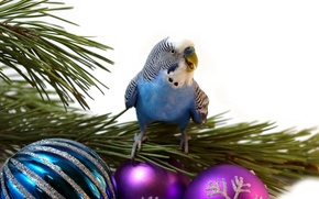 Picture green, balls, tree, new year, Christmas, branch, beak, white background, Parrot, wavy parrot