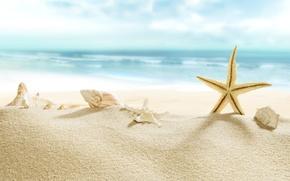 Picture beach, sea, sun, sand, starfish, seashells