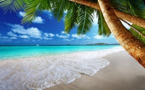 Picture sand, sea, beach, the sun, tropics, palm trees, the ocean, shore, island, summer, beach, sea, ...