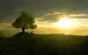 Picture sunset, loneliness, Tree