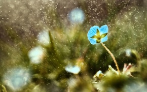 Picture flower, grass, drops, macro, blue, rain