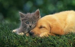Wallpaper dog, kitty, friends