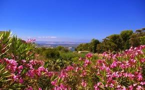 Picture the sky, flowers, mountains, island, Malta, Gozo