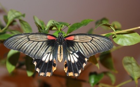Picture butterfly, butterfly, plant, wings