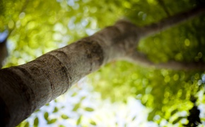 Picture leaves, morning, tree, freshness, greens, mood, tilt-shift, branches, bokeh wallpapers, leaf wallpapers, leaves wallpapers, macro ...