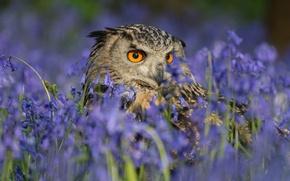 Picture flowers, owl, bird, bells, owl
