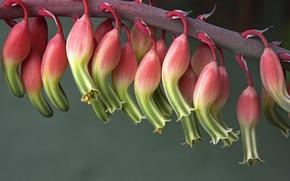 Picture flowers, plant, cactus, flowering