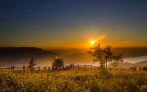 Picture nature, fog, morning