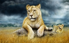Picture family, Savannah, the cubs, lioness