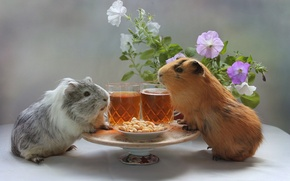 Picture flowers, beer, Guinea pig, peanuts