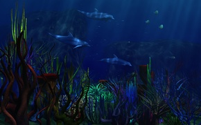 Wallpaper the bottom, dolphins, corals, fish
