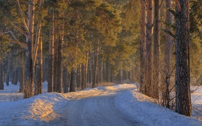 Picture winter, road, forest, snow, trees, the snow