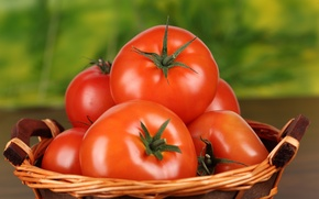 Wallpaper food, red, tomato, tomatoes