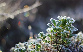 Wallpaper macro, crystals, snow, cold, frost, leaves, bokeh, plant