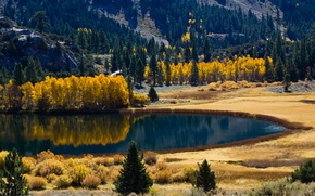 Picture autumn, forest, nature, lake