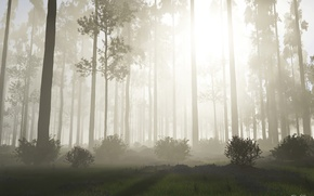 Wallpaper forest, the sun, trees, nature, fog, sunrise, morning, the bushes