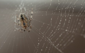 Picture spider, nature, macro, bokeh, web, worm