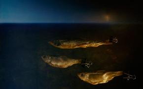 Picture creative, fantasy, fish, art, roach